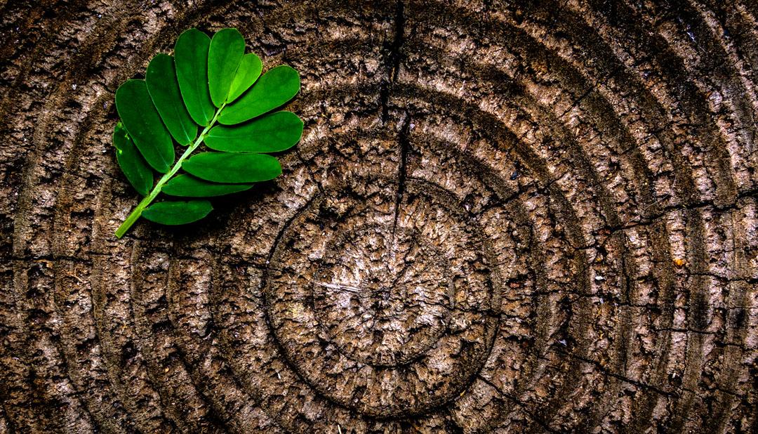 1º Destaque - Programa de Pós-graduação e Pesquisa em Recuperação Ambiental