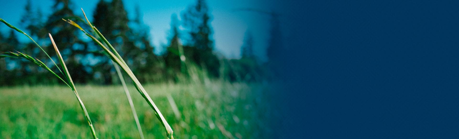 3o Destaque - Programa de Aperfeiçoamento e Pesquisa em Recuperação Ambiental